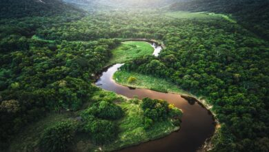 Photo of رحلة برازيلي صمد وحيداً 38 يوماً في أدغال الأمازون بعد سقوط طائرته