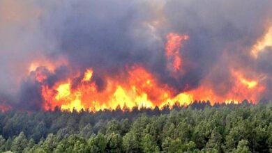 Photo of عقوبات حرق الغابات والمزارع تصل حدّ الإعدام